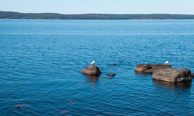 穏やかな青い湖に石と鳥