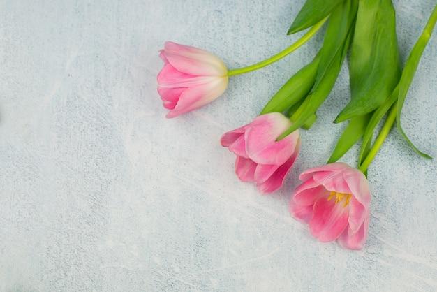Красивые тюльпаны на весенний праздник