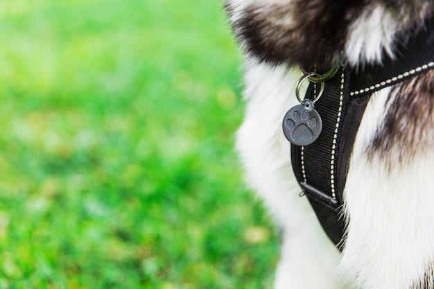 Медальон собаки. хаски собака в парке