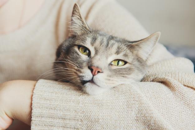 Серый кот на руках у девушки гладит кота