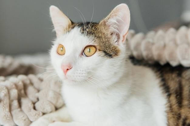 灰色の格子縞の縞模様の猫