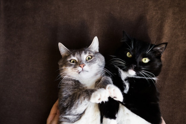 Две кошки вместе серый и черный и белый