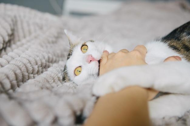 Злой кот кусает женский палец. игривая кошка