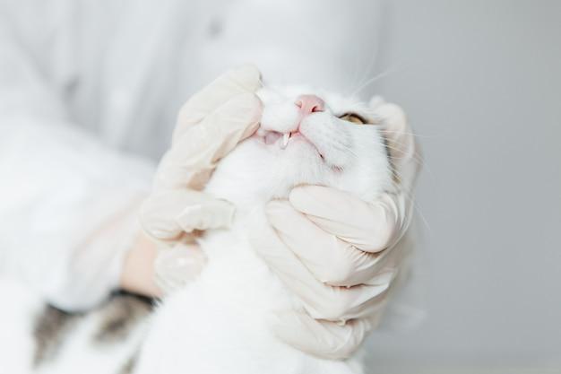 獣医師が診察した猫