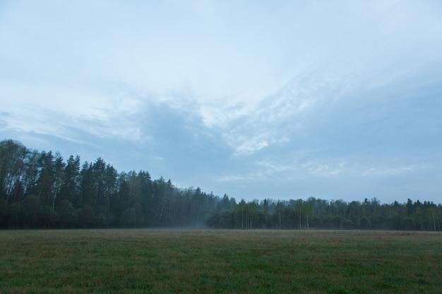 Туман в зеленом лесу в долине. красивый пейзаж с зеленым лесом рано утром