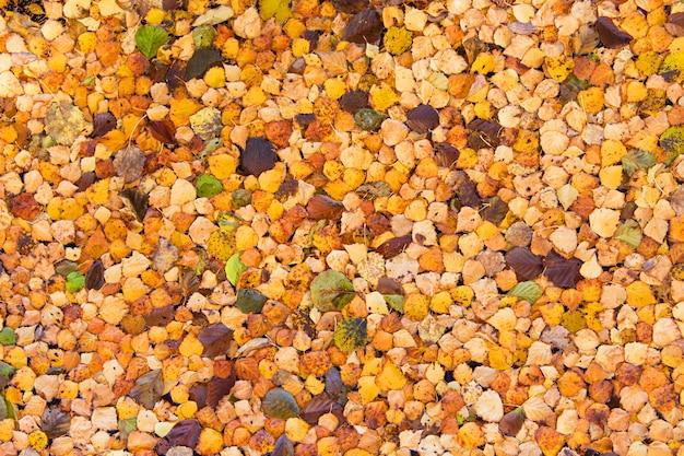 秋の葉の質感。秋の背景。オレンジの葉
