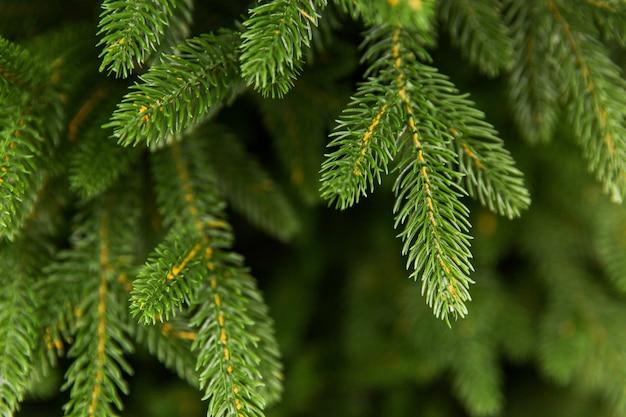 緑のスプルース枝。クリスマスツリー。緑の針。新年の準備