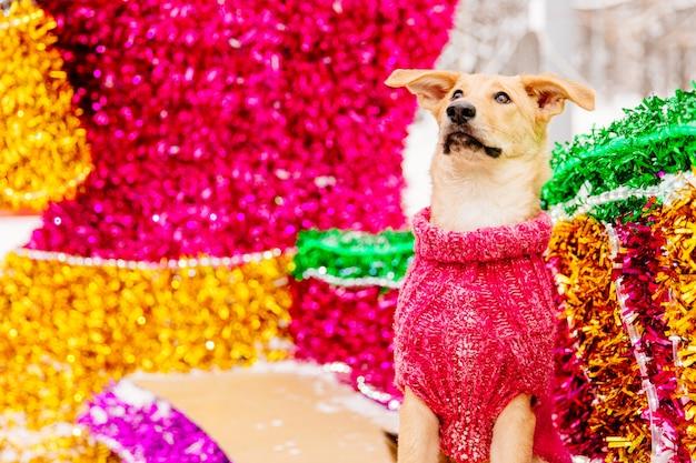 ピンクの装飾的な背景の上に座っている光の茶色犬