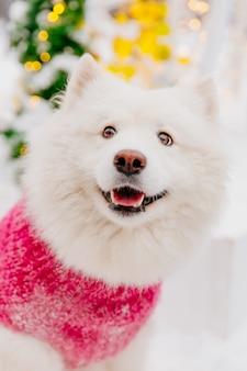 森の中の雪の上に座っている白い血統犬。面白い動物