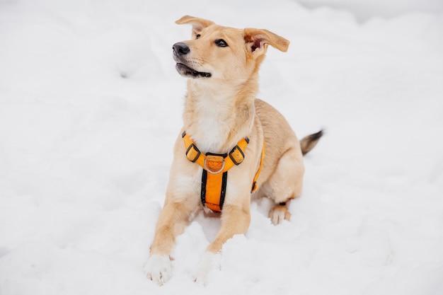 森の中の雪の上に座っている遊び心のある明るい茶色の犬
