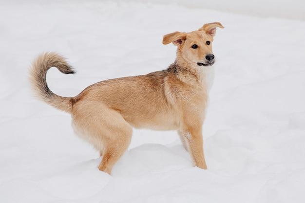 森の中の雪の上の遊び心のある明るい茶色犬