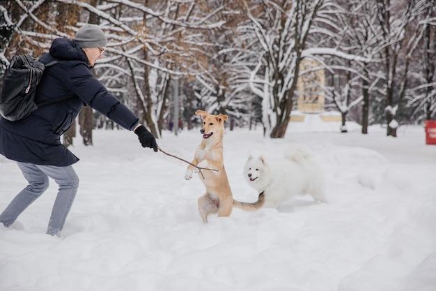 雪の中でハンドラーで遊ぶ犬