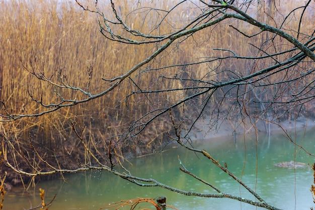 霧霧の木と川の秋の風景