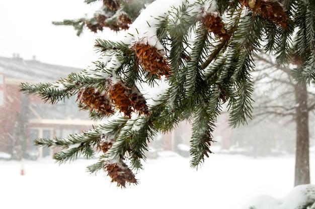 最初のスノーパインコーンツリー自然冬