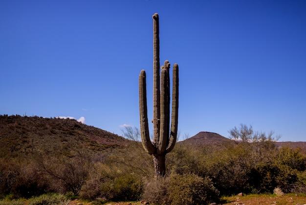 Живописный вид на пустыню феникс аризона в южной горе