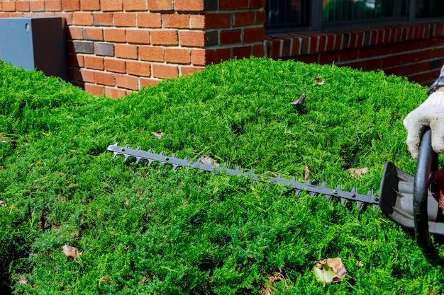 Обрезка живой изгороди с помощью кустореза. выборочный фокус