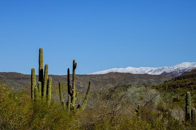Снег в пустыне аризоны, к северу от тусона, штат аризона, погодные явления принесли снегопад в горы