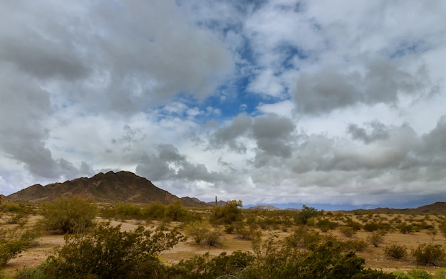 Пустынный ландшафт в фениксе, штат аризона кактус на горе