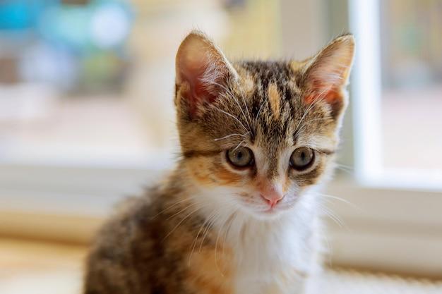 かわいいオレンジ色の子猫は、柔らかい夢のような効果を得るために特殊なレンズで撮影しました。