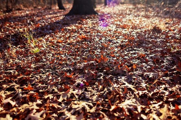 Фоновая текстура из желтых листьев