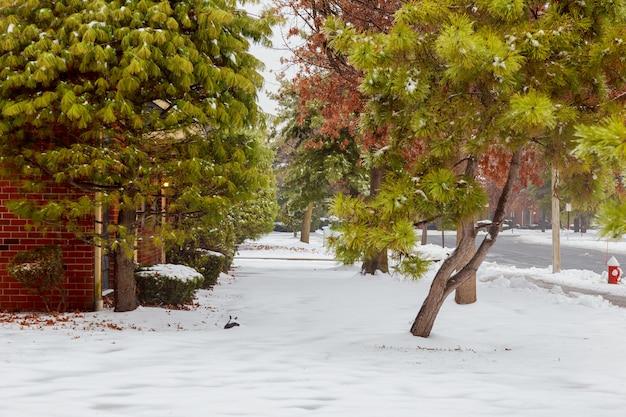Зимний лесной фон