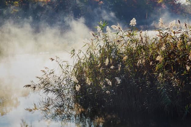 鮮やかな色の湖秋の霧の霧風景