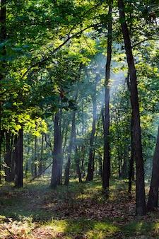 霧の朝に秋の森の小道に落ちる木漏れ日。