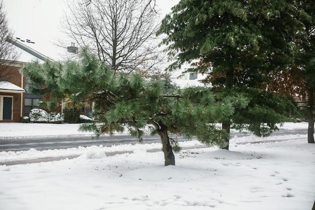 雪嵐冬の雪の木の後の素敵な家