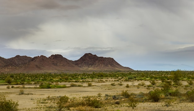 Кактус сагуаро в пустыне аризоны. горы на восточном горизонте аризоны