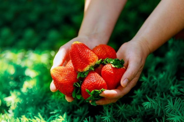 緑の草に女性の手で大きなイチゴ