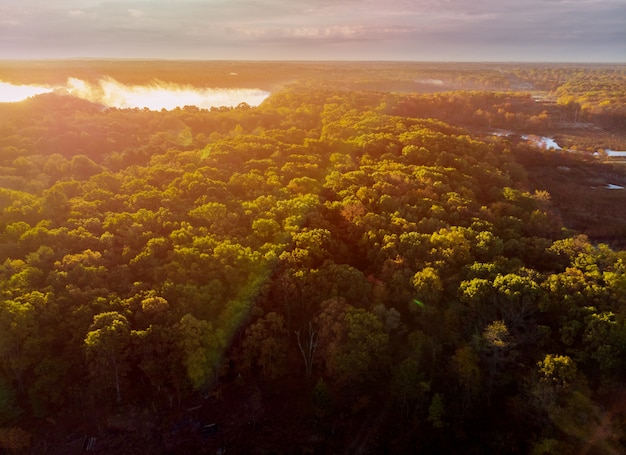 Лучи солнца пробиваются сквозь туман в лесу