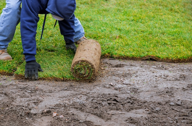 Применяя газон, раскручивая новый рулон травы