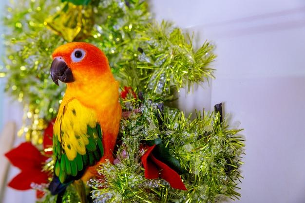 鳥はクリスマスの飾りに座っています。