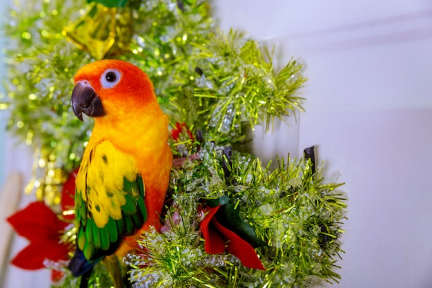 Птица сидит на рожденственский орнамент.