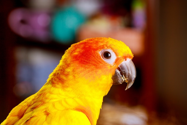 Попугай ест и смотрит