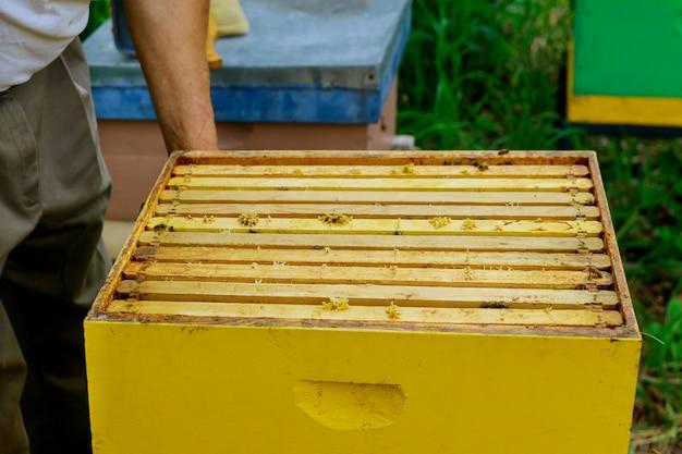 養蜂家は蜂蜜の充填をチェックするためにハニカムでフレームを取り出します