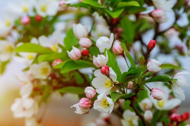 自然の背景の上の花の木。春のピンクの花。春の背景