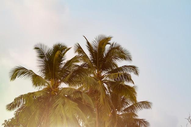 Вид снизу кокосовой пальмы, тонированное солнечным светом