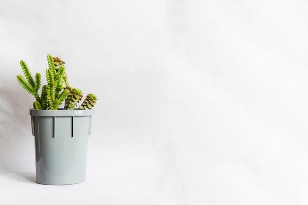 多肉植物または天然の小さな緑の植物