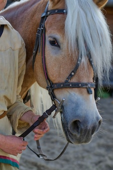 ハーネス付きマズル馬。人の手は手綱を握ります。屋外。