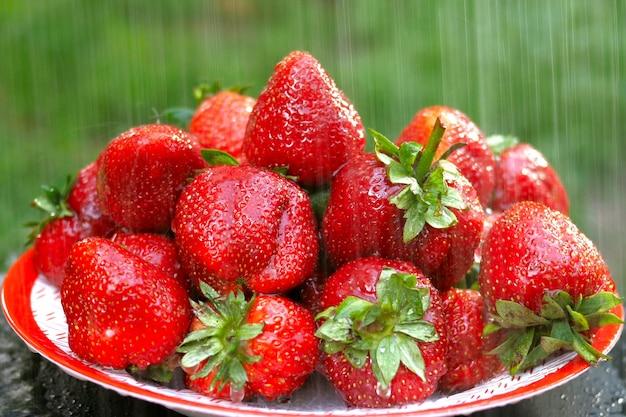 夏の果実大きな赤い熟したイチゴが雨を降らしています。白い皿の上のテーブルの上。