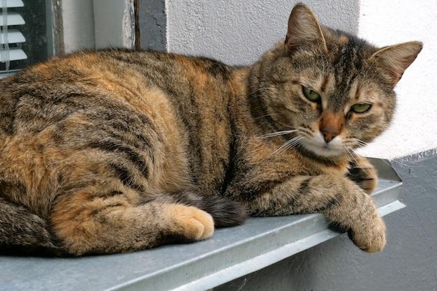 家やホームレスの猫は家の窓辺に横になっています。