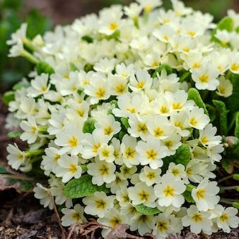 春の花壇に白い花の花束。