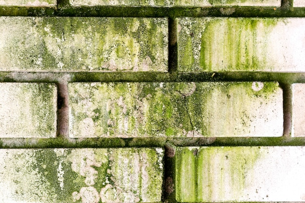 真菌で腐ったレンガの白い壁。抽象的な背景。