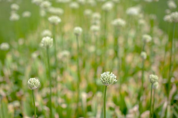 白い花と緑の牧草地のテクスチャ。