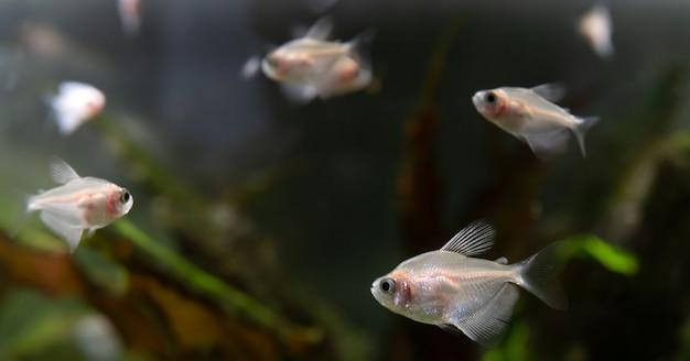 水族館の小さな魚