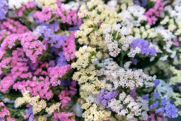 小さなピンクと青の花。パニクラータフラミンゴ
