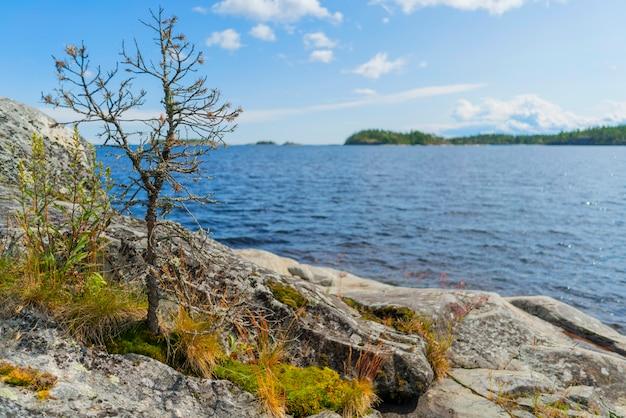 ラドガ湖の島。美しい風景-水、松と岩。