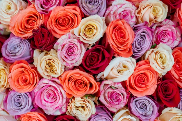 結婚式や婚約のための美しいバラ。