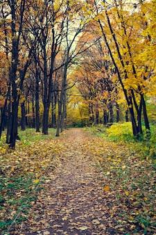 秋の公園の路地。落ち葉。悲しい秋の風景。